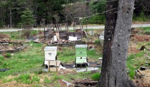 active hives