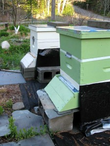 two hives