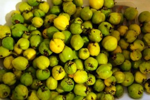 heaps of quince