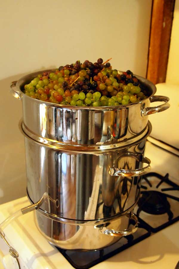 steam canner full of grapes