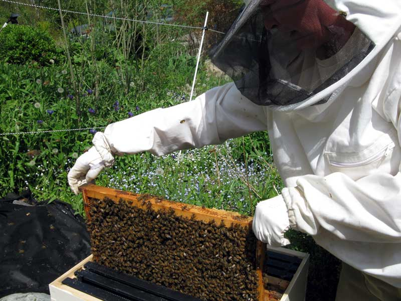 Placing frames into the hive