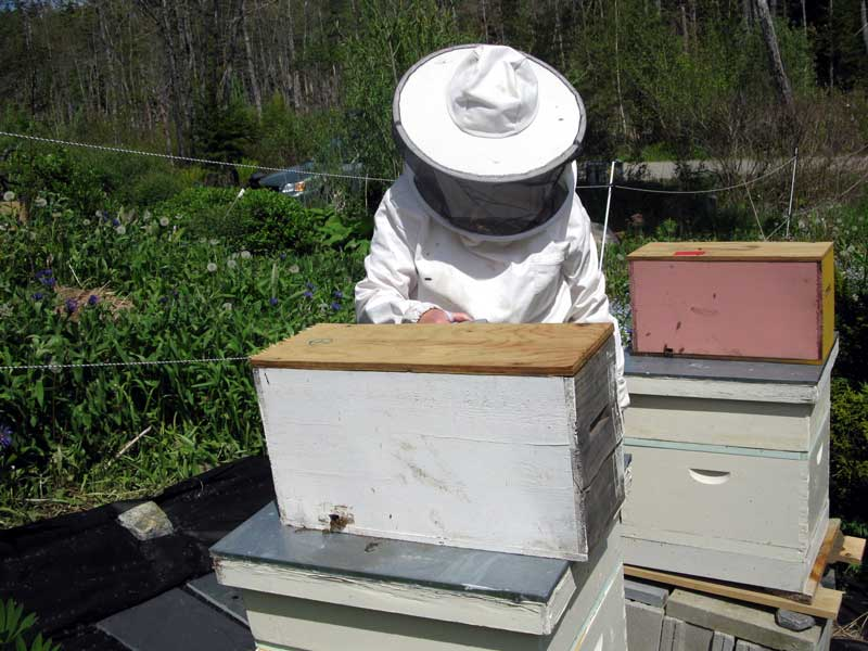 Bees in nuc boxes