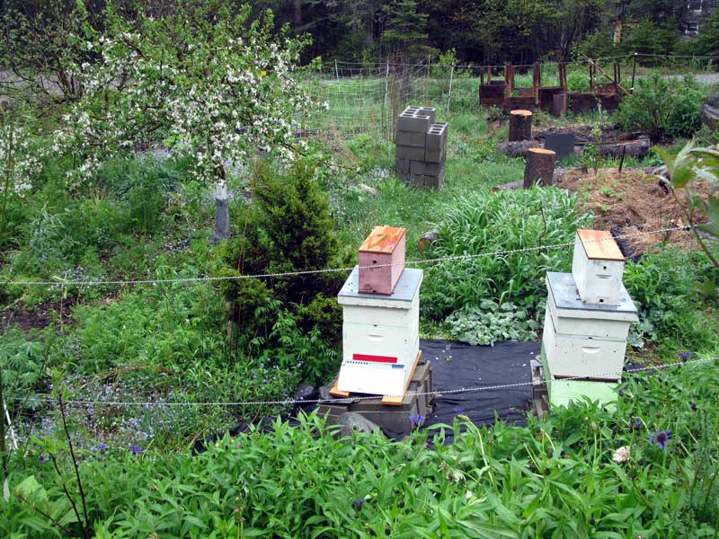 two nucs in the garden