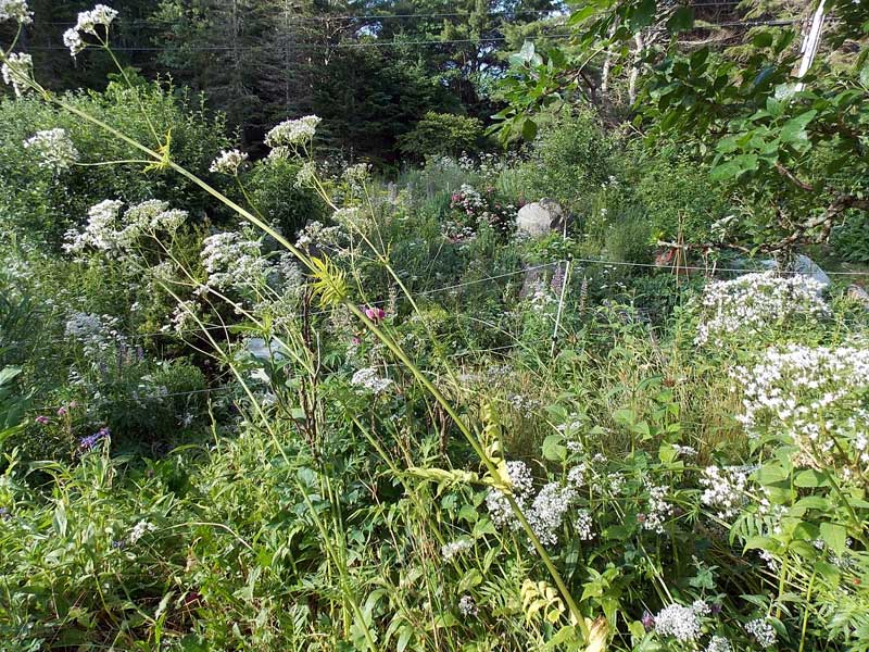 long view of valerian jungle