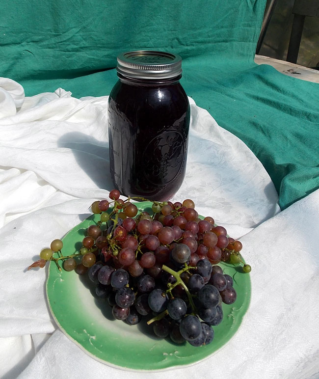 Beta grape harvest